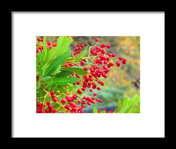 Macro Framed Print featuring the photograph Berries Macro by Amie Ebert