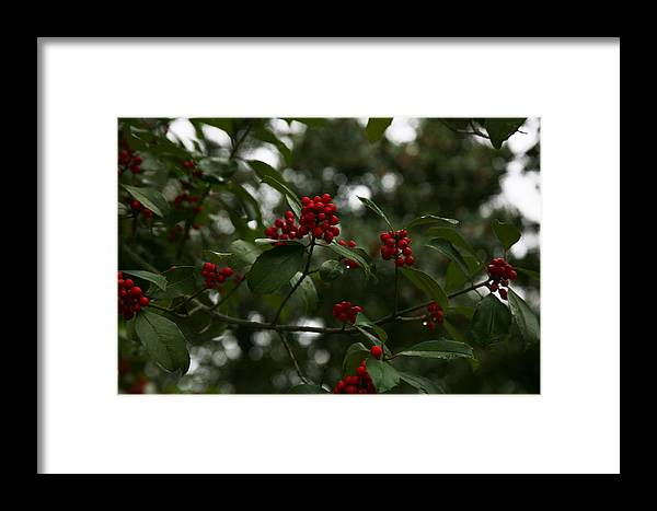 Tree Framed Print featuring the photograph Berries by Ryan Johnson
