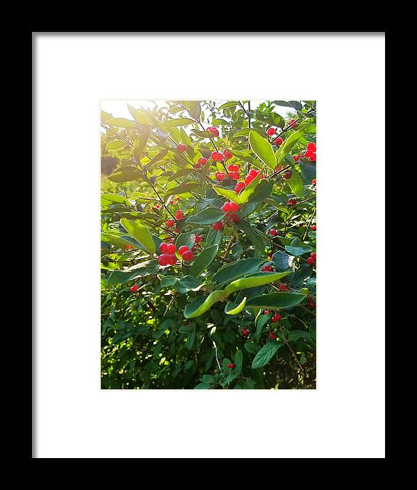 Framed Print featuring the photograph Berries by Taylor Mercer