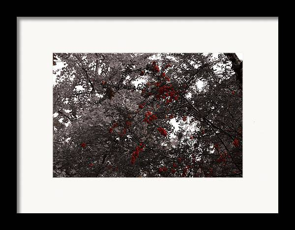 Nature Framed Print featuring the photograph Berry Trees by Bill Ades
