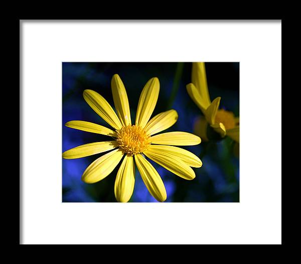 Flower Framed Print featuring the photograph Best Day by Mitch Cat