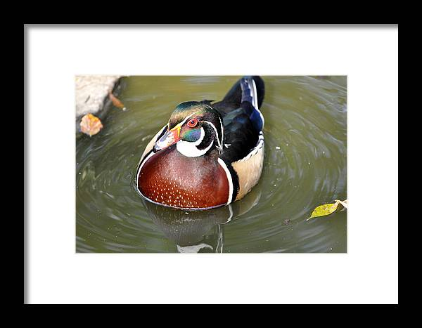 Birds Framed Print featuring the photograph Best Dressed by Jan Amiss Photography