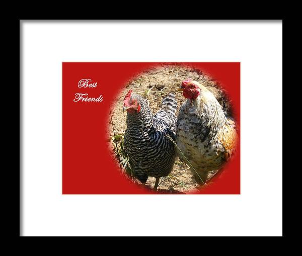 Chickens Framed Print featuring the photograph Best Friends by James and Vickie Rankin