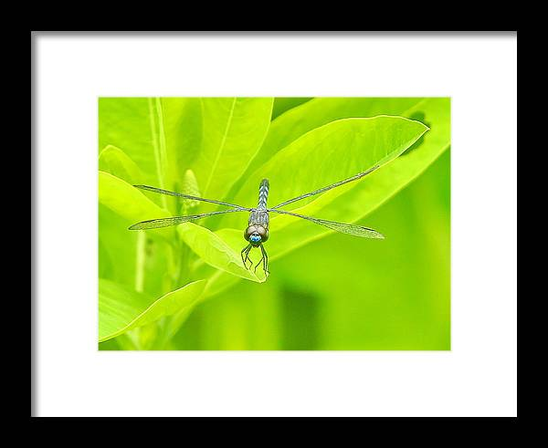 Dragon Framed Print featuring the photograph Bi-plane by BYETPhotography