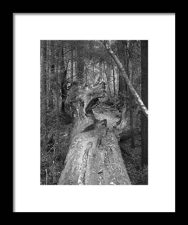 Landscape Framed Print featuring the photograph Big Basin 2 by Karen W Meyer