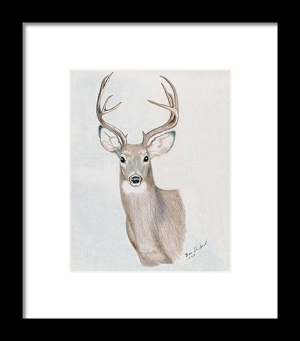 Wildlife Framed Print featuring the drawing Big Buck by Daniel Shuford