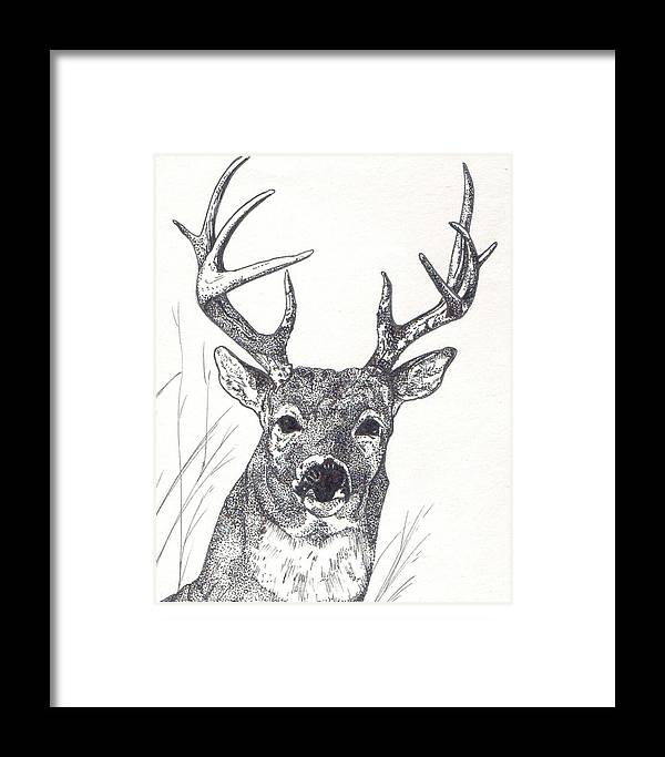 Whitetail Deer Framed Print featuring the painting Big Buck by Debra Sandstrom