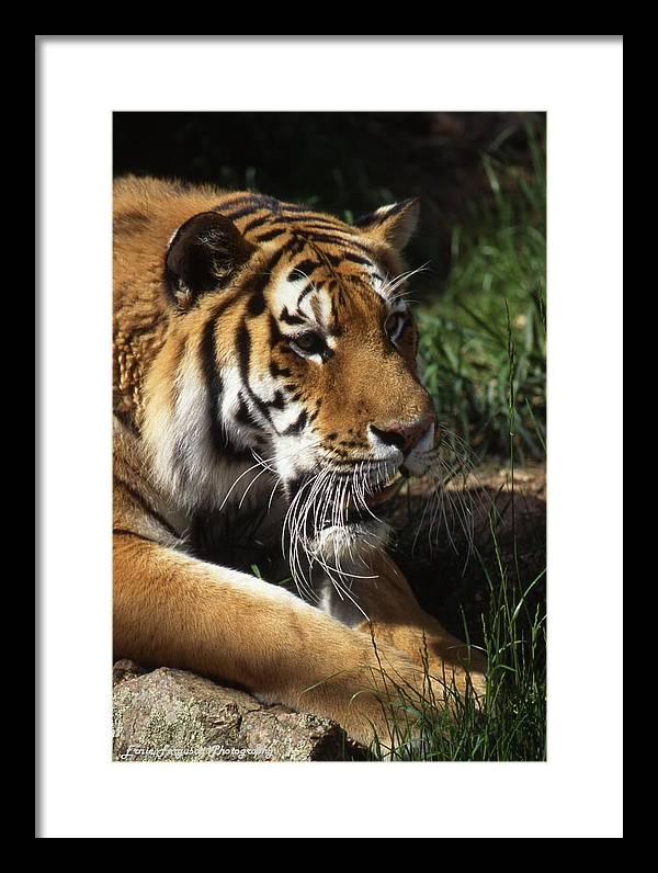 Animal Framed Print featuring the photograph Big Cat by Ernie Ferguson