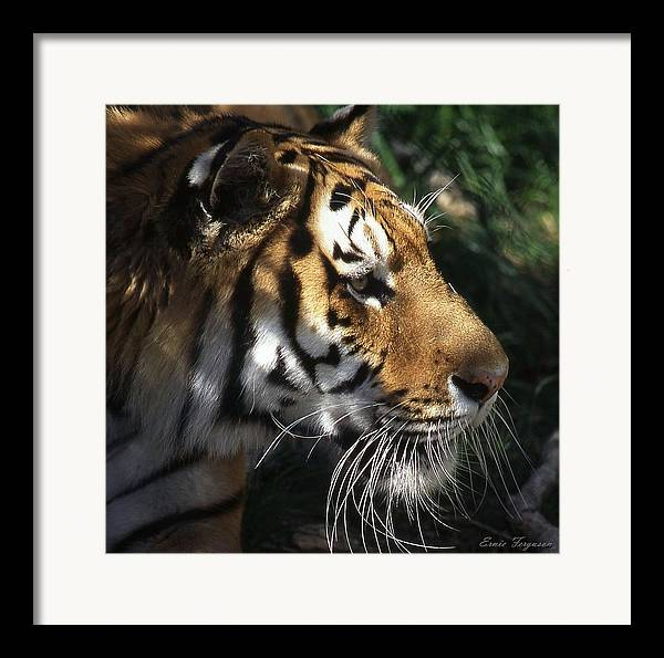 Animals Framed Print featuring the photograph Big Cat No 60 by Ernie Ferguson