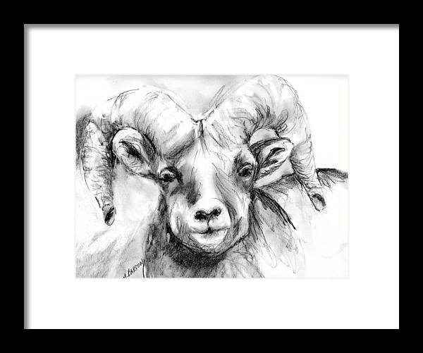 Big Horn Framed Print featuring the drawing Big Horn Sheep by Marilyn Barton