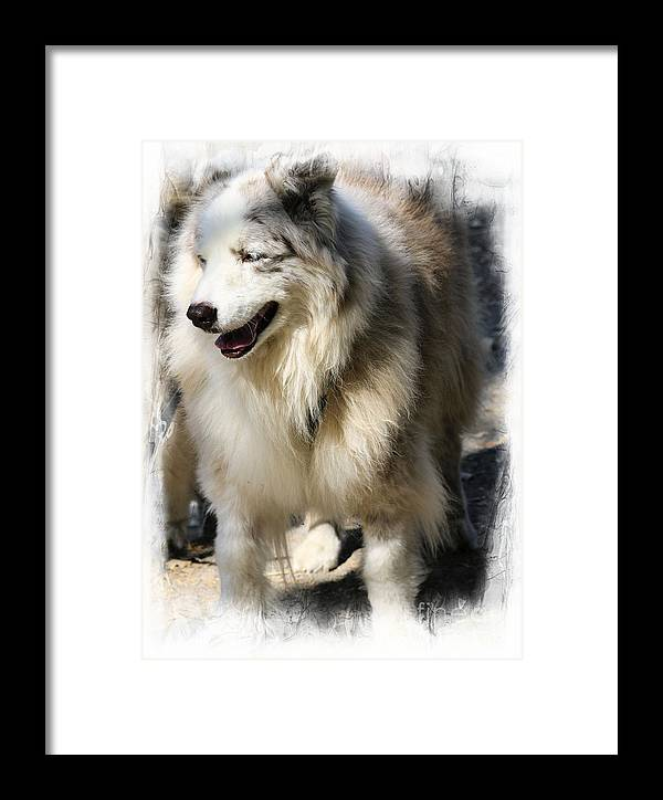 Animals Framed Print featuring the photograph Big Love by Leslie Hunziker