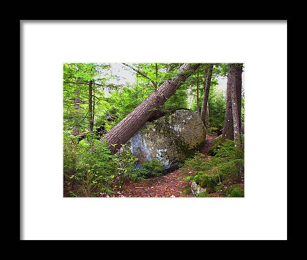 Trees Framed Print featuring the photograph Big Rock by Denise Keegan Frawley