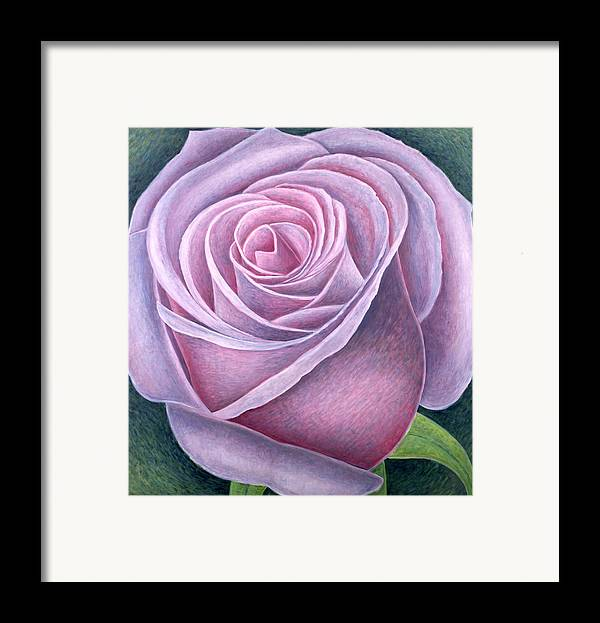 Still Lives Of Flowers Framed Print featuring the painting Big Rose by Ruth Addinall
