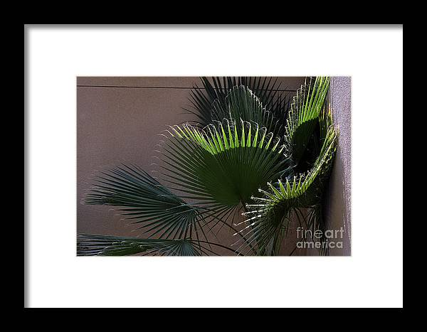 Clay Framed Print featuring the photograph Biggest Fans by Clayton Bruster