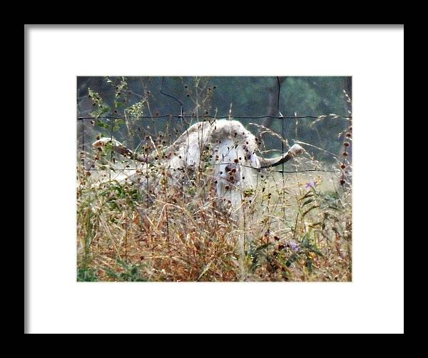 Landscape Framed Print featuring the photograph Billy by Denis King