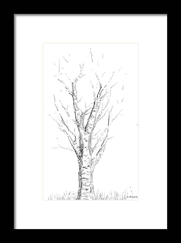 Tree Framed Print featuring the drawing Birch Abstraction Study by Regina Valluzzi