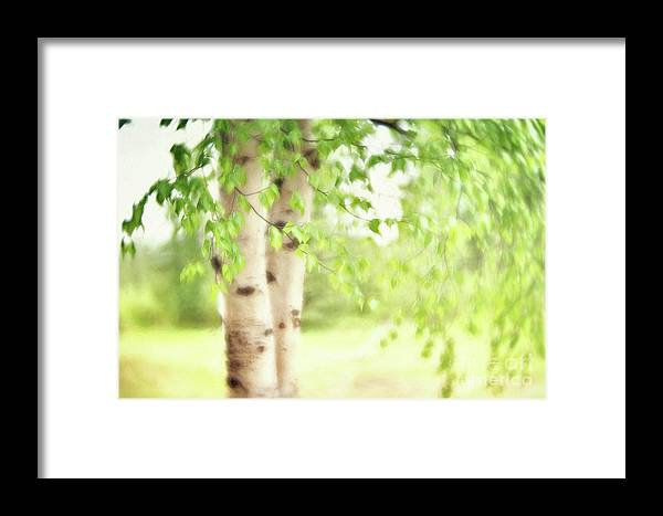 Green Framed Print featuring the photograph Birch In Spring by Priska Wettstein
