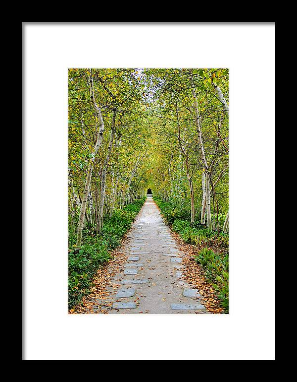 Pathway Framed Print featuring the photograph Birch Pathway Perspective by Kristin Elmquist