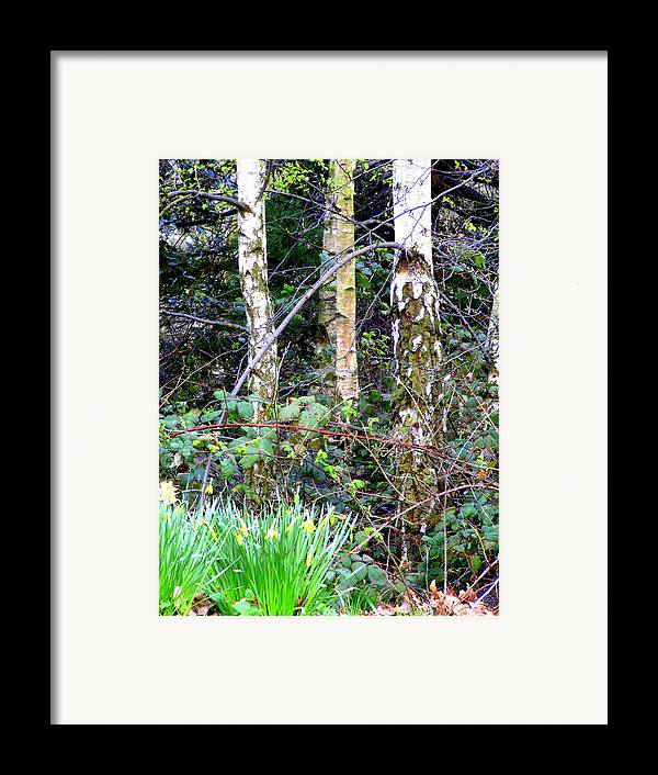 Birch Framed Print featuring the photograph Birch Trees In London by Mindy Newman
