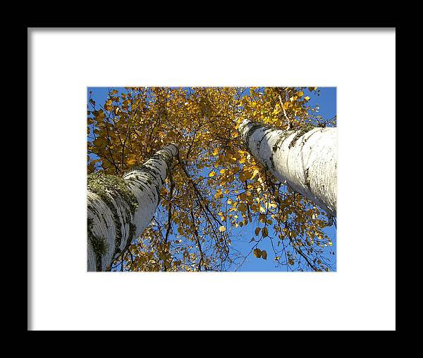 Birch Tree Framed Print featuring the photograph Birch Twins by Jessica Yudis