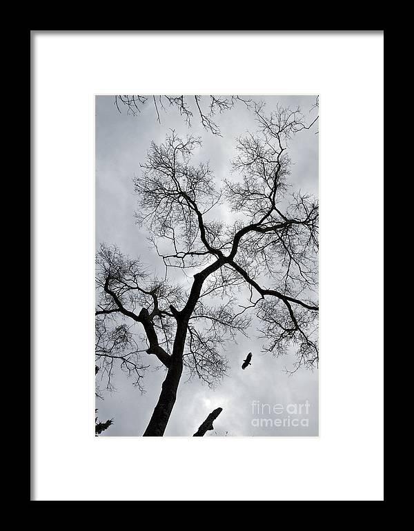 Bird Framed Print featuring the photograph Bird And Tree by Bernd Billmayer