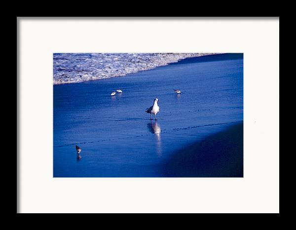 Ocean Framed Print featuring the photograph Bird At Ocean's Tide by George Ferrell