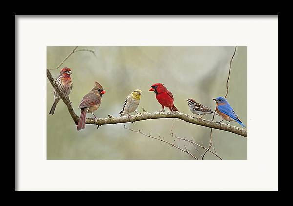 Finch Framed Print featuring the photograph Bird Congregation by Bonnie Barry