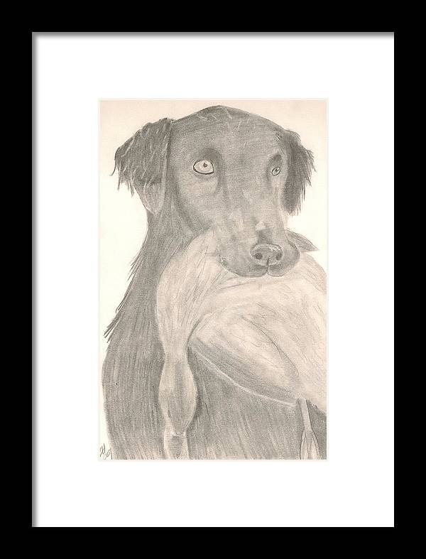 Dog Framed Print featuring the drawing Bird Dog by Kristen Hurley