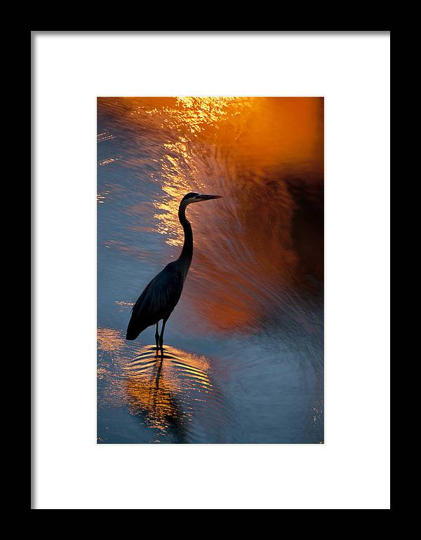 Smithfield Framed Print featuring the photograph Bird Fishing At Sundown by Williams-Cairns Photography LLC