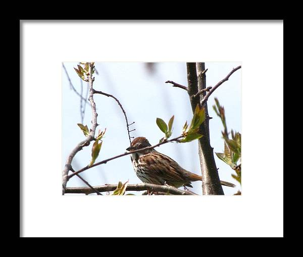 Small Framed Print featuring the photograph Bird In Spring by Melissa Parks