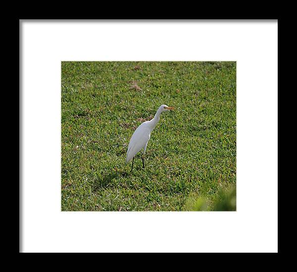 White Bird Framed Print featuring the photograph Bird Is The Word by Rob Hans