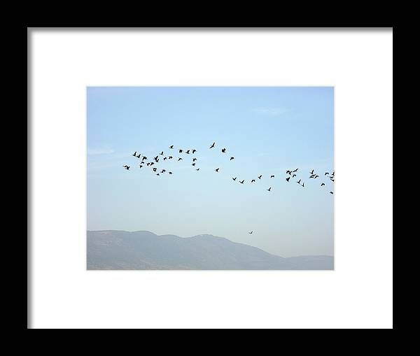 Israel Framed Print featuring the photograph Bird Migration by Rachel Figueroa