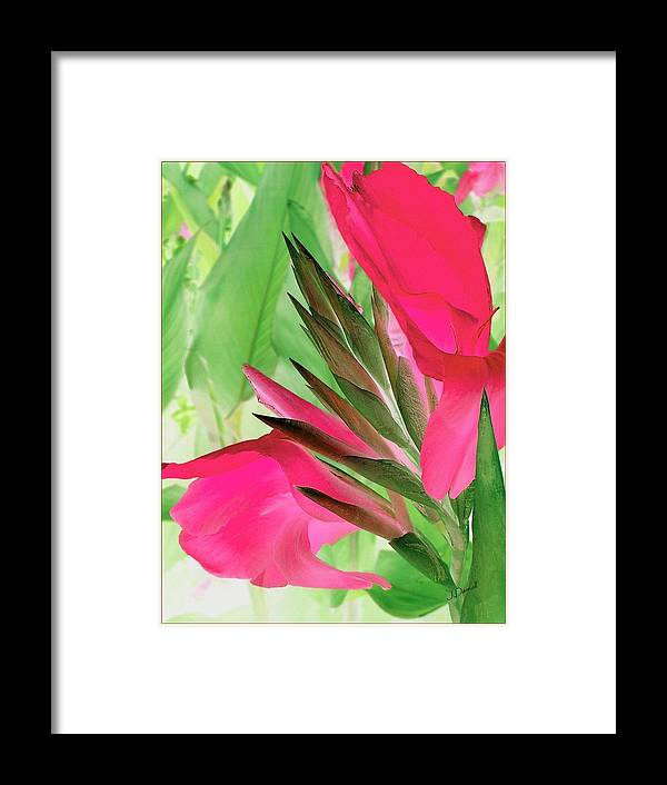 Flower Framed Print featuring the digital art Bird Of Paradise 2 by Jim Darnall