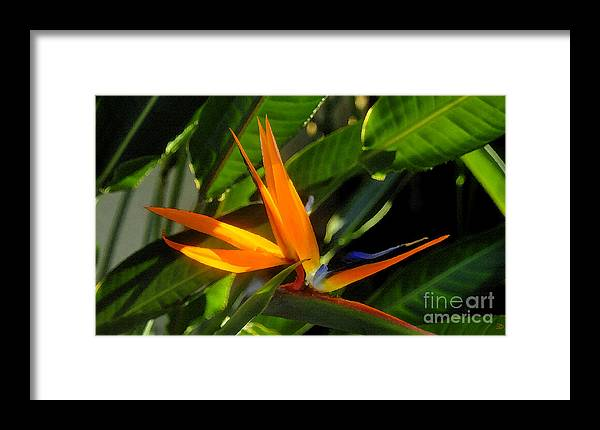 Bird Of Paradise Framed Print featuring the painting Bird Of Paradise by David Lee Thompson