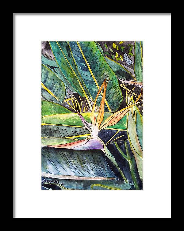 Watercolor Framed Print featuring the painting Bird Of Paradise by Derek Mccrea