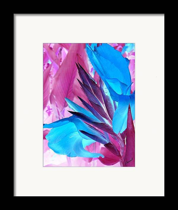 Flower Framed Print featuring the photograph Bird Of Paradise by Jim Darnall