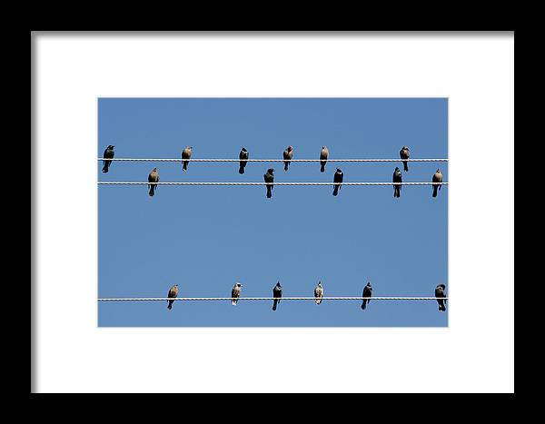 Birds Framed Print featuring the photograph Bird On A Wire by Christine Till