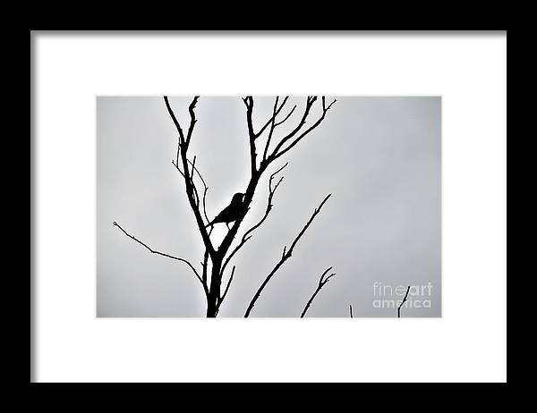 Lone Framed Print featuring the photograph Bird Silhouette by Tracey Lee Cassin