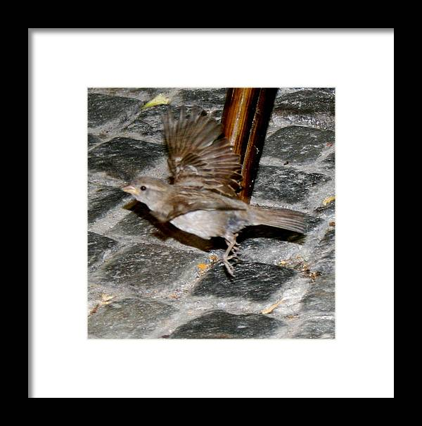 Bird Framed Print featuring the photograph Bird Taking Flight by Sara Summers