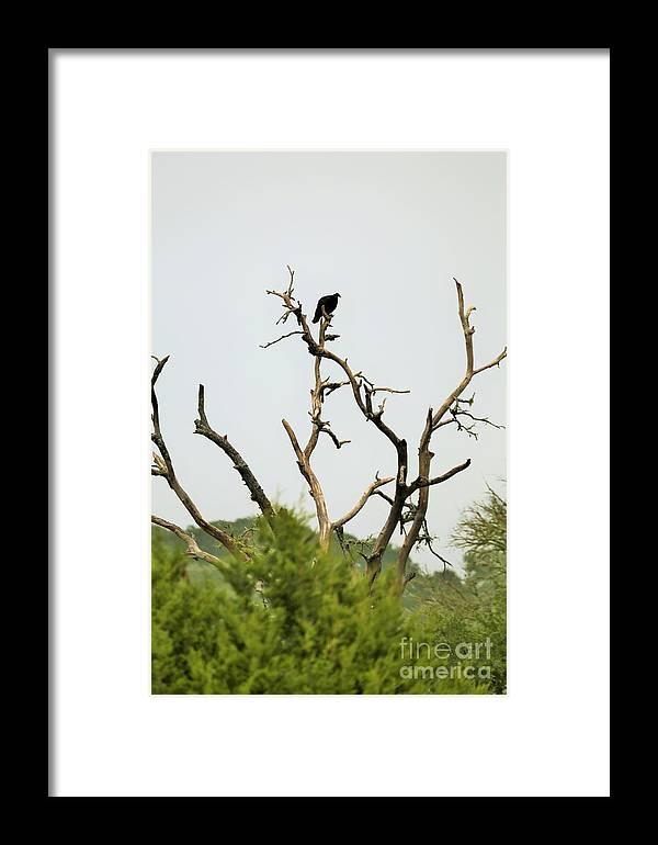 Framed Print featuring the photograph Bird011 by Jeff Downs