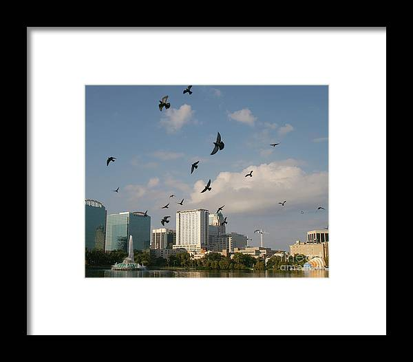Building Framed Print featuring the photograph Birded Dowtown by Jack Norton