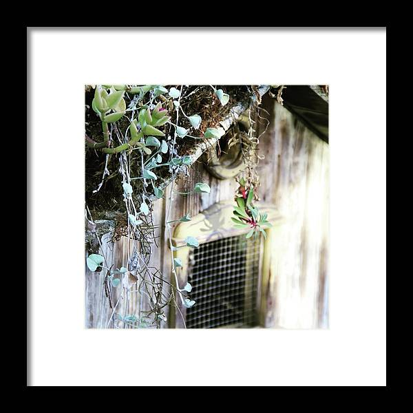 Birdhouse Framed Print featuring the photograph Birdhouse by Lori Leigh
