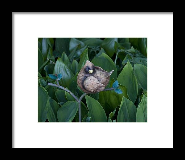 Photography Framed Print featuring the photograph Birdie by Bill Ades