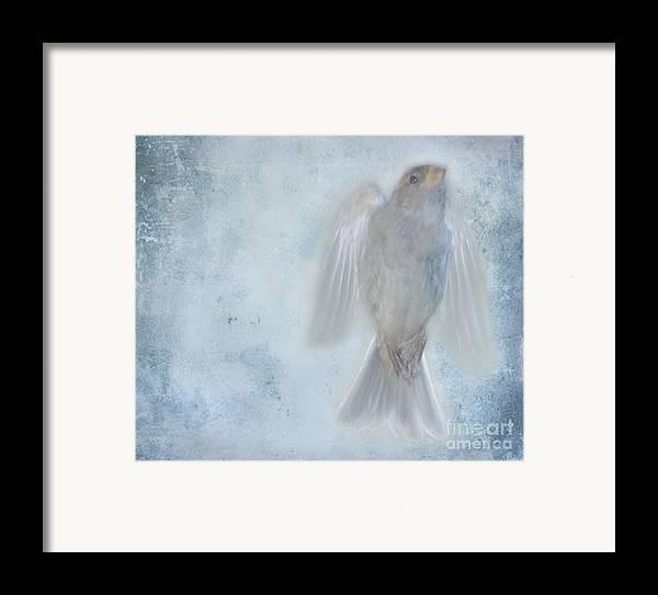 Bird Framed Print featuring the photograph Birdness by Jim Wright