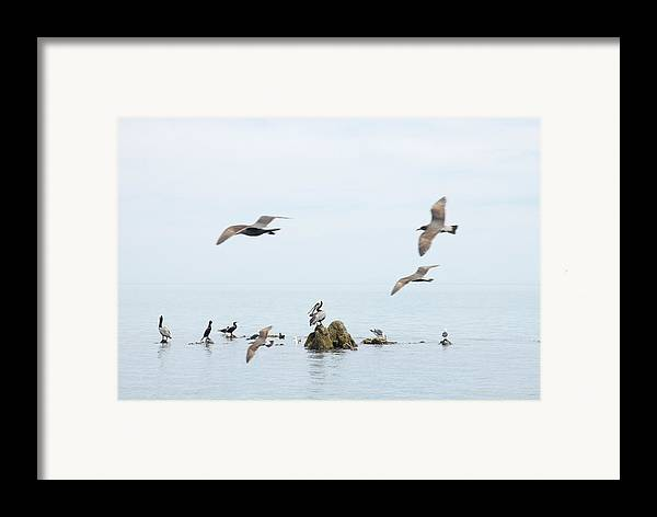 Seagull Framed Print featuring the photograph Birds by Elisa Locci