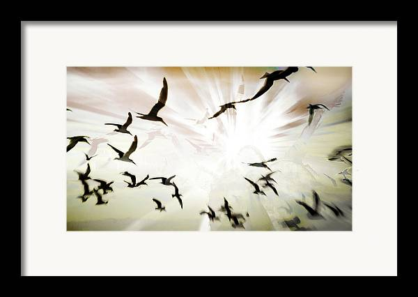 Digital Photography Framed Print featuring the photograph Birds Explosion by Tony Wood