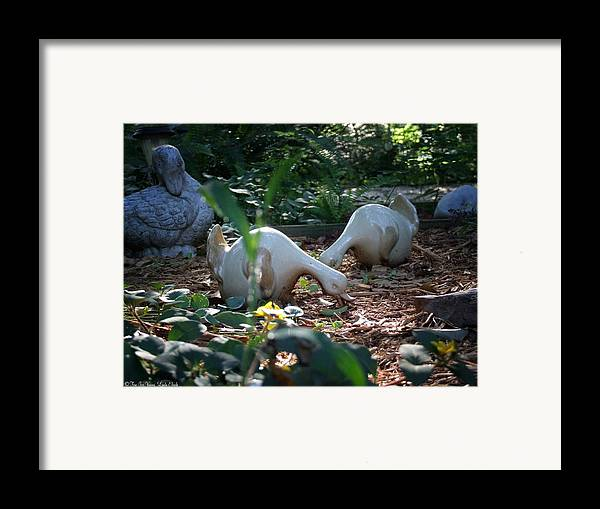 Garden Flowers Flower Bed Ornaments Garden Creatures Framed Print featuring the photograph Birds Eye View by Linda Ebarb