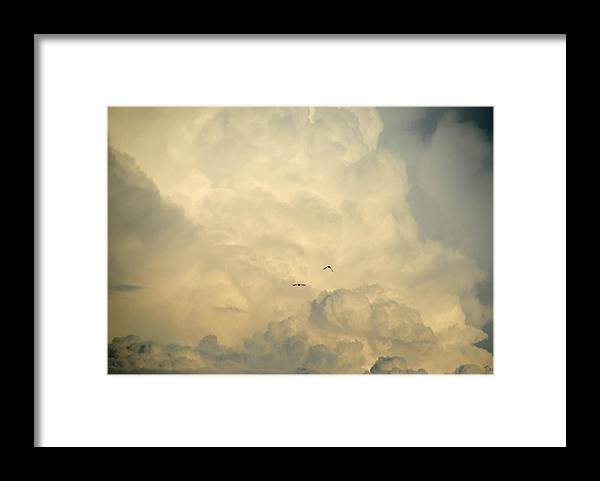 Clouds Framed Print featuring the photograph Birds in the Clouds by Vallee Johnson
