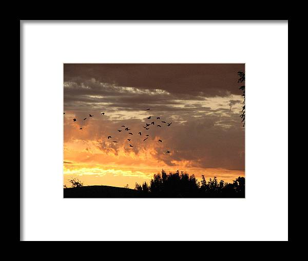 Birds Framed Print featuring the photograph Birds In The Sky by Kathy Roncarati