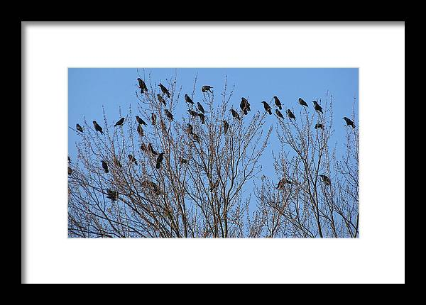 Bird Framed Print featuring the photograph Birds In The Trees by Kathy Roncarati